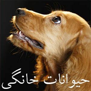 عکاسی حیوانات خانگی